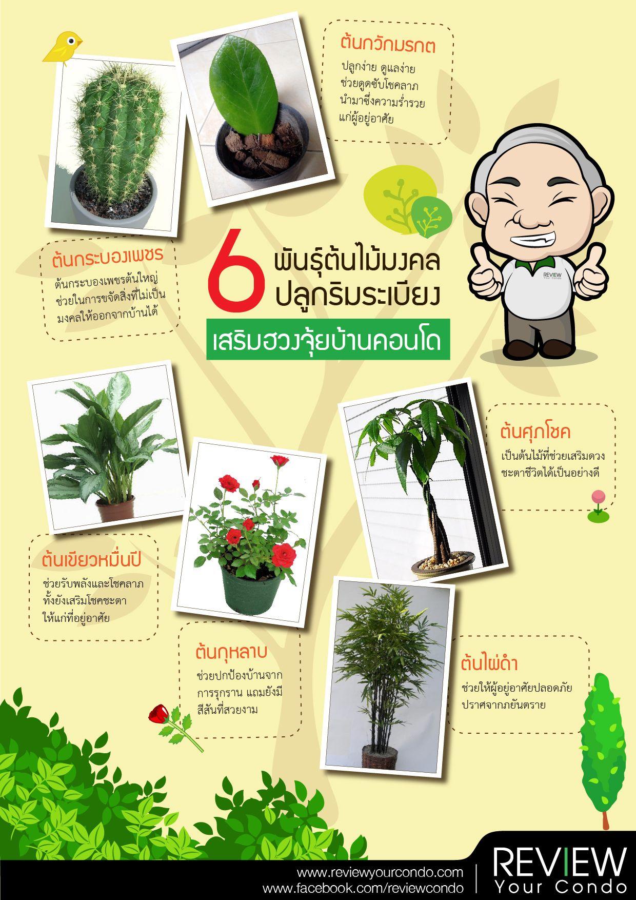 6 พันธุ์ต้นไม้มงคลปลูกริมระเบียง เสริมฮวงจุ้ยบ้านคอนโด