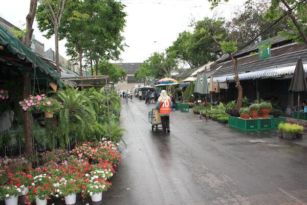 ตลาดต้นไม้ สวนจตุจักร มีทั้งต้นไม้ใหญ่ ไม้ดอก ไม้ประดับ
