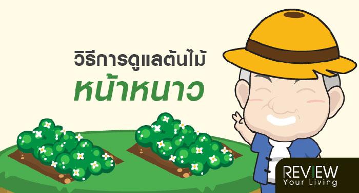 วิธีการดูแลต้นไม้หน้าหนาววิธีการดูแลต้นไม้หน้าหนาว