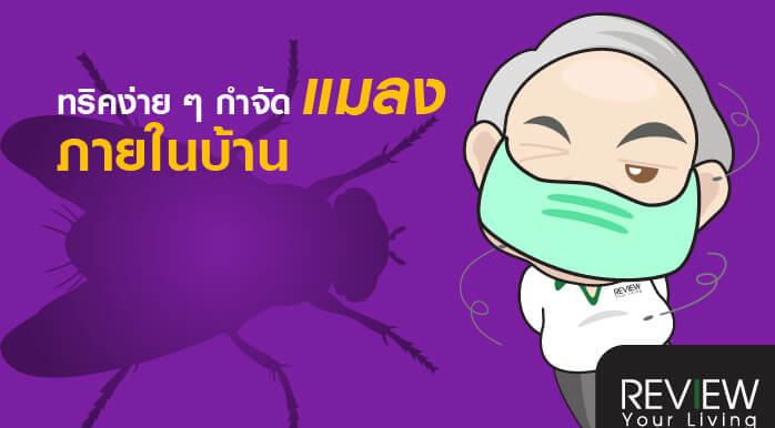 6 ทริคง่าย ๆ กำจัดสารพัดแมลงกวนใจภายในบ้านทริคกำจัดแมลง