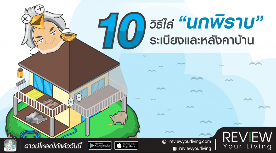10 วิธีไล่นกพิราบระเบียงและหลังคาบ้าน วิธีง่าย ๆ ที่ได้ผลจริง
