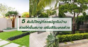 5 ต้นไม้ใหญ่ที่ควรปลูกไว้ในบ้าน ช่วยให้เย็นสบาย เสริมสิริมงคลด้วย
