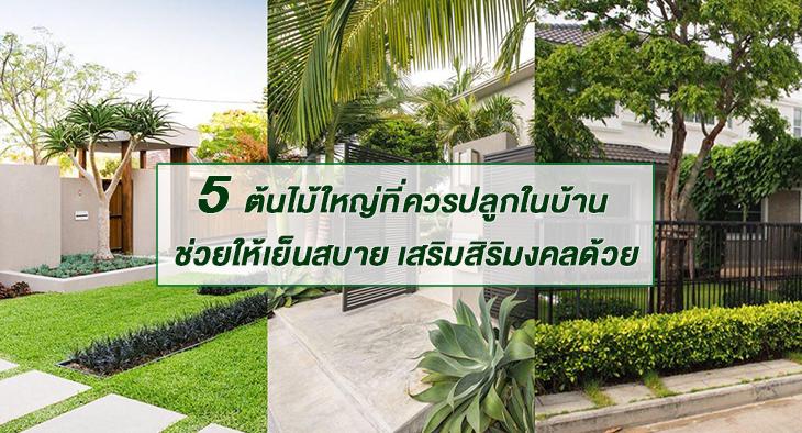 5 ต้นไม้ใหญ่ เสริมสิริมงคล ช่วยให้เย็นสบายที่ควรปลูกไว้ในบ้าน