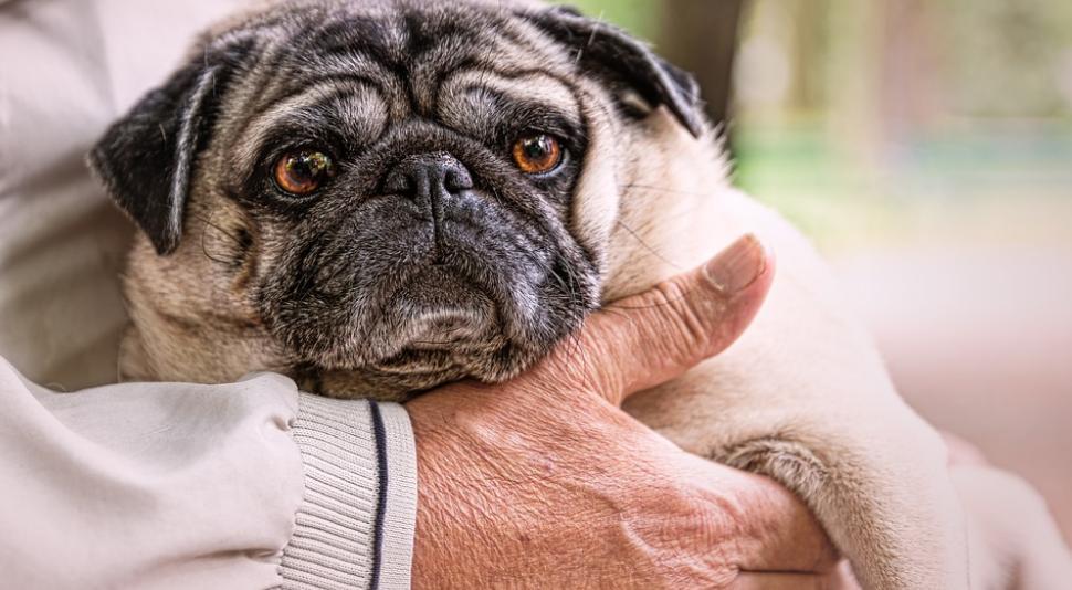ควรดูแลสุขภาพอย่างไร?เมื่อสมาชิกในครอบครัวเลี้ยงน้องหมาไว้ในบ้าน