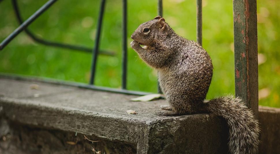 คิดอยากจะเลี้ยงสัตว์เล็กๆ สักตัว ในคอนโดฯ เลี้ยงอะไรดี